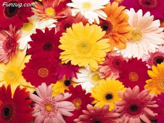 Flowers to Make You Feel Fresh
